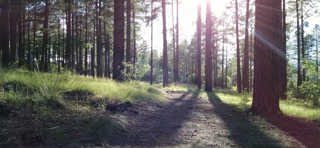 forestry commercial appraisal northwest florida MAI
